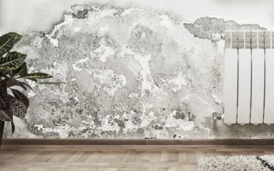 How long does it take for mold to grow in wet drywall?