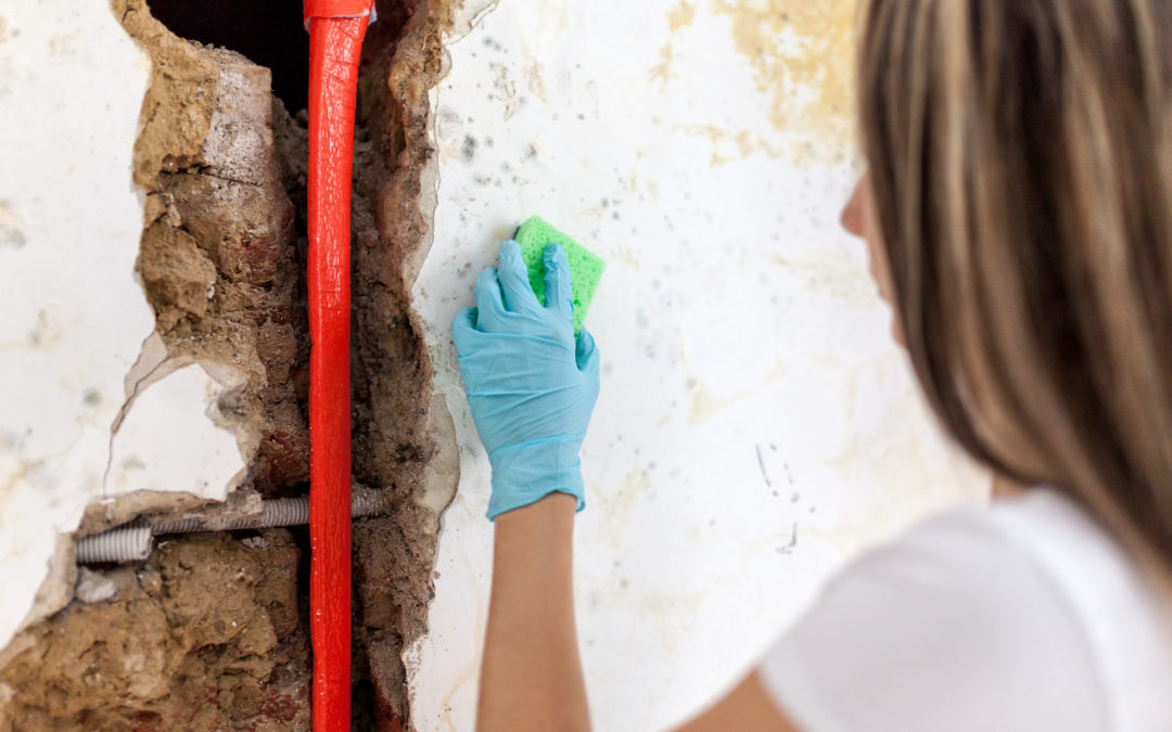 Removing mold from a wall