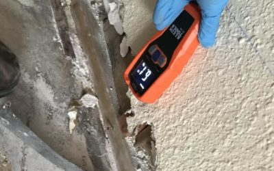What You Should Know About Black Mold